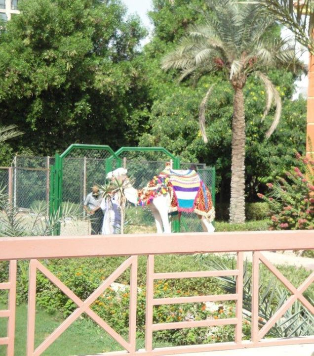 Wielbłąd Hotel Seagull Beach Resort