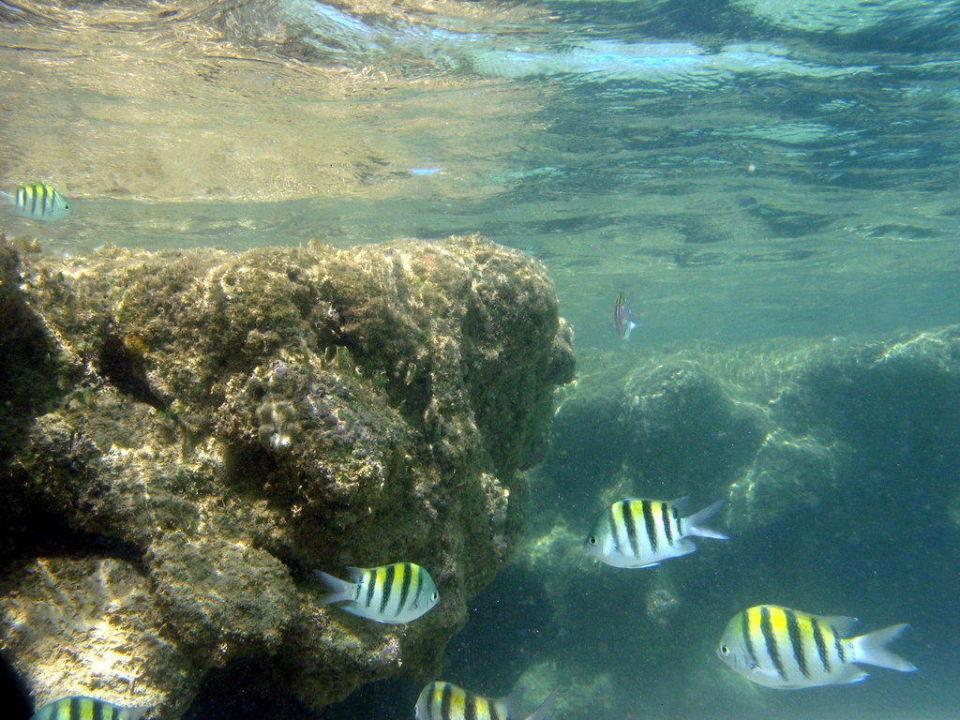 Fische im Wasser am Riff Grand Bahia Principe El Portillo