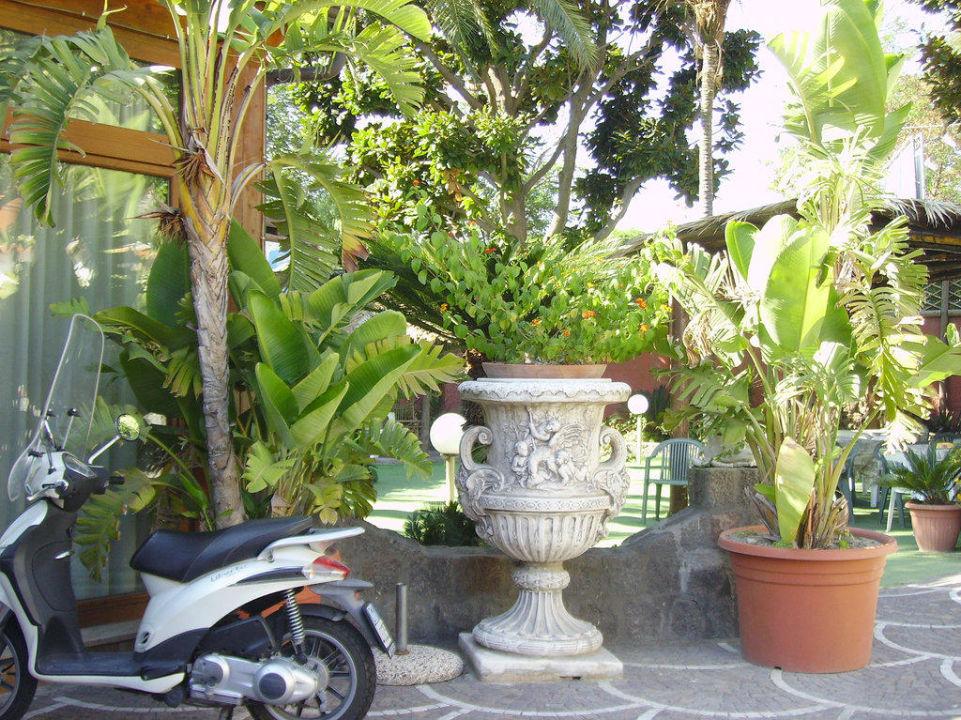 Pflanzen vor dem Hoteleingang Hotel Villa Franca
