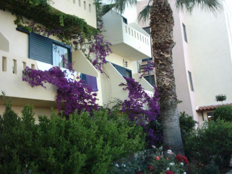 Blumen, Blumen, Blumen Hotel Almiros Beach