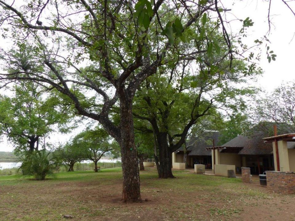 Gartenanlage  Restcamp Lower Sabie