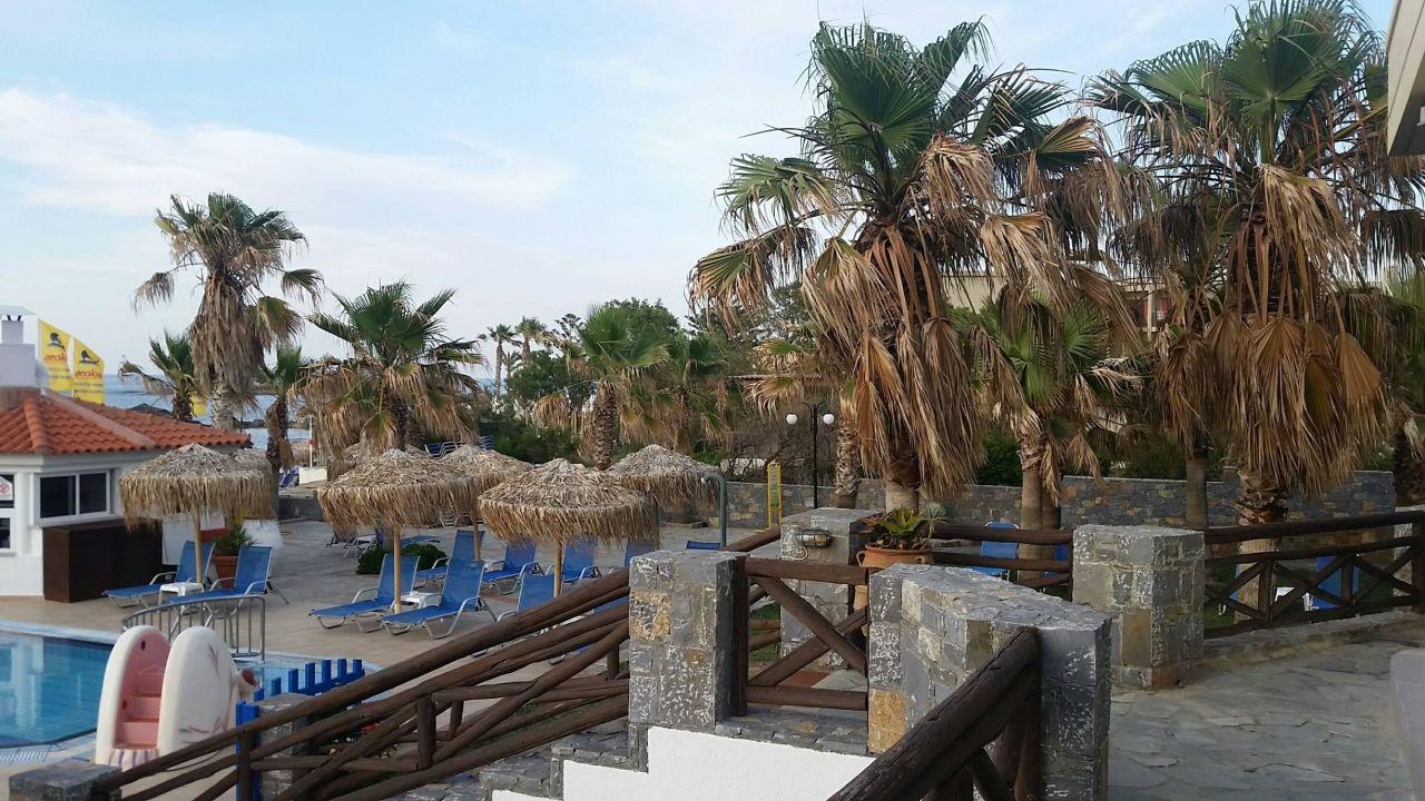 Poolbereich Hotel Aeolos Beach Malia Holidaycheck Kreta
