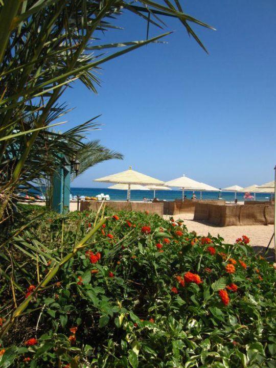 Strand, dahinter viel Grün Menaville Safaga