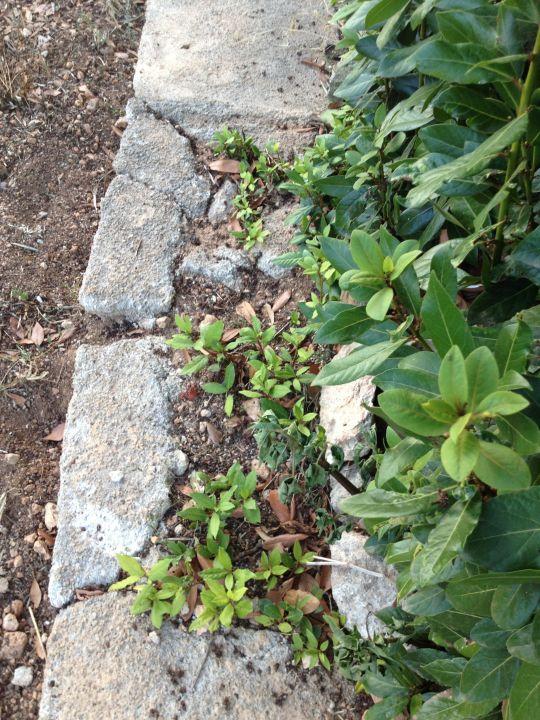 Ungepflegter Garten Finca Kalotta
