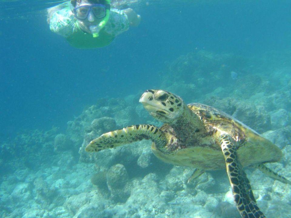 Schnorcheln mit einer Schildkröte Fihalhohi Island Resort