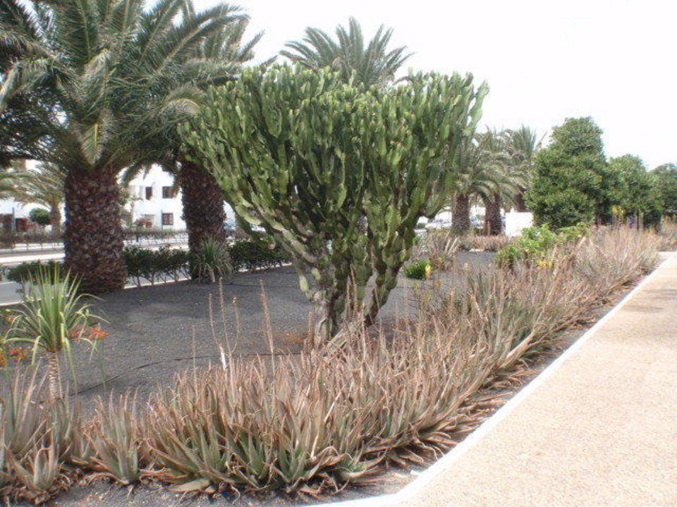Hote Hotel Mansion Nazaret