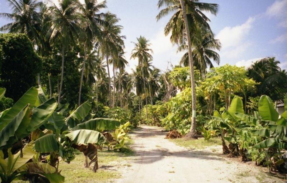 Plantage Meeru Island Resort & Spa
