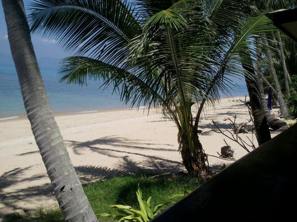 Strand vor dem Haus Coconut Tropicana T 1