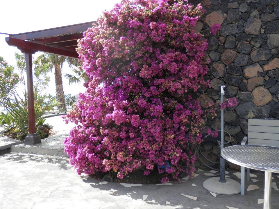 Weg zur Terrasse Casa Petra