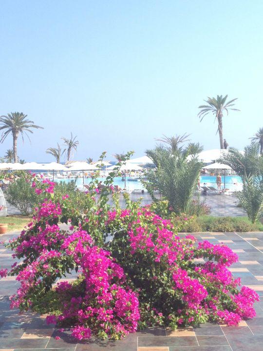 tolle pflanzen am pool noah 39 s ark deluxe hotel spa bafra holidaycheck nordzypern zypern. Black Bedroom Furniture Sets. Home Design Ideas