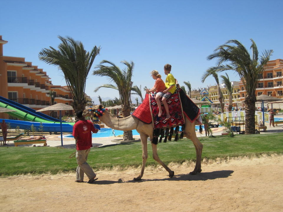 "Das ""Hotel""-Kamel Casanova Hotel The Three Corners Sunny Beach Resort"