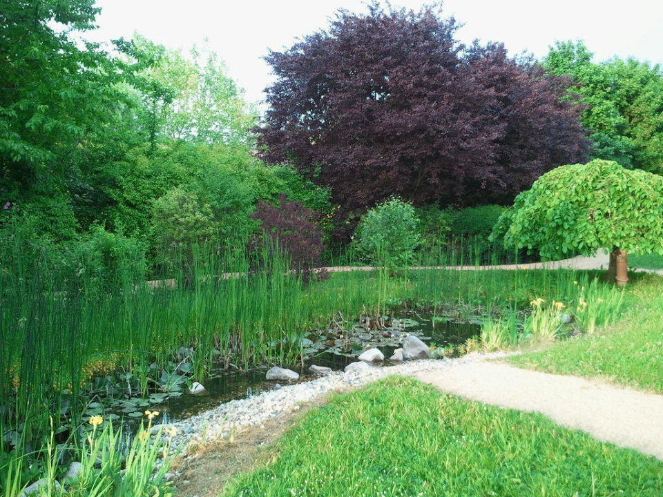 Gartenanlage mit Teich\