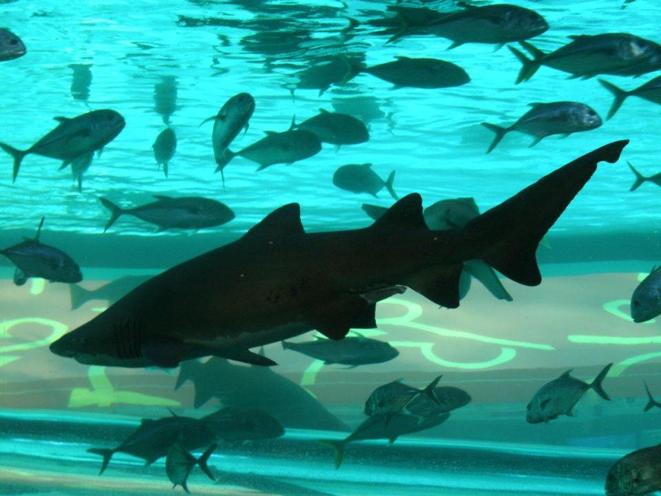 Haifischbecken