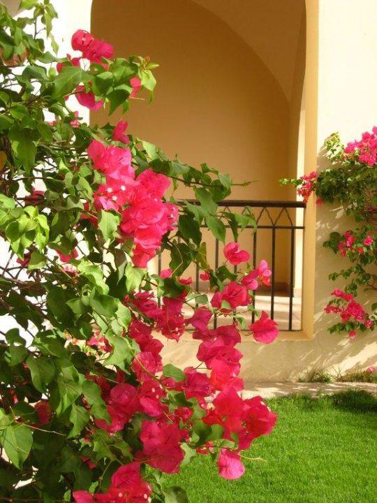 Vor der Terrasse Hotel JAZ Makadi Star & Spa