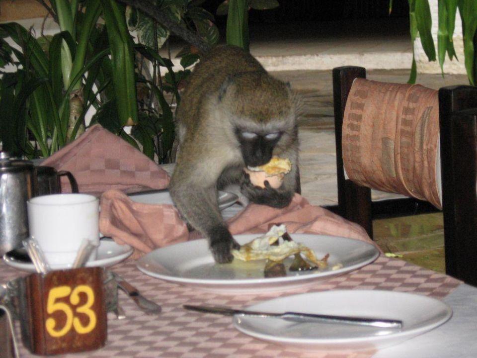 Affenfrühstück! Hotel Safari Beach