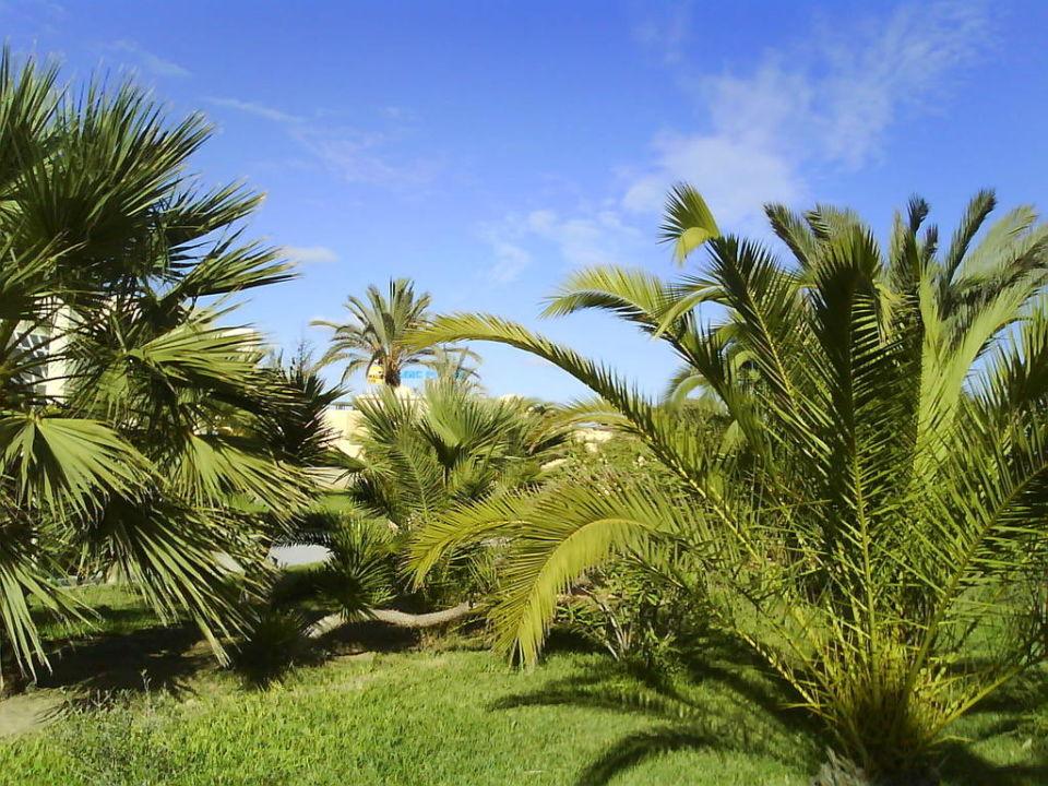 palmen unter blauen himmel was braucht man mehr tui magic life penelope beach in houmt souk. Black Bedroom Furniture Sets. Home Design Ideas
