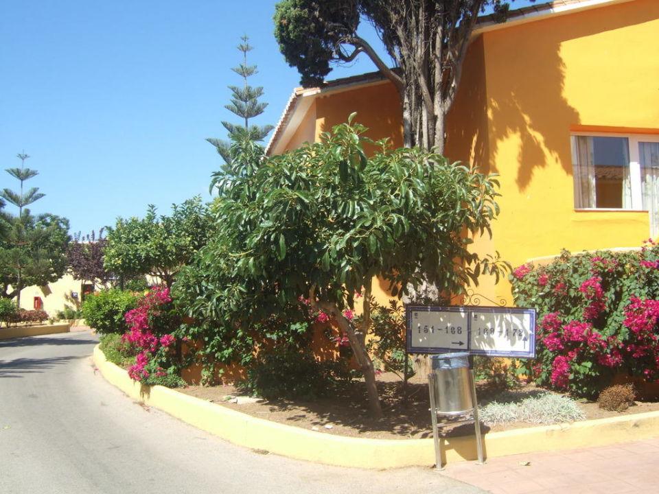 Bungalow Mit Gartenanlage Hotel Marbella Playa Marbella