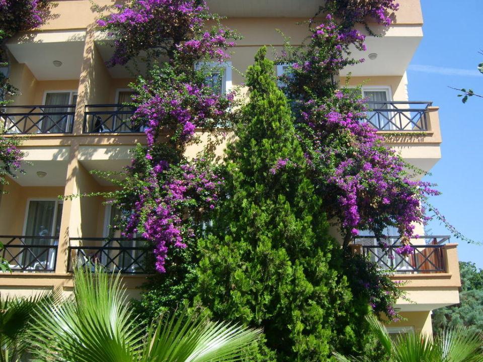 Eines der Nebenhäuser, hübsch bewachsen Hotel Club Dizalya
