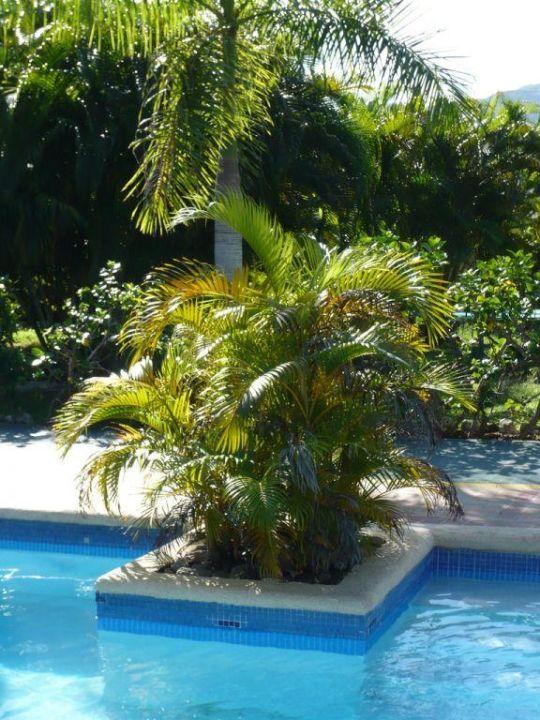 Bepflanzung des Ruhe-Pools Hotel Royal Decameron Club Caribbean
