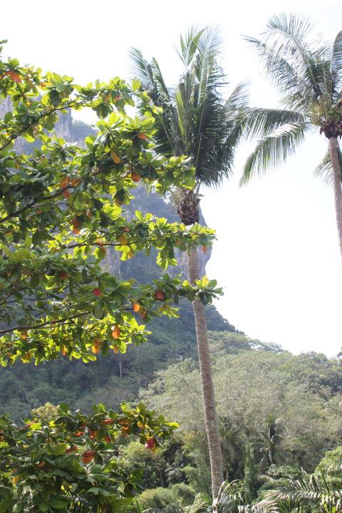 Pool Hotel Ao Nang Paradise Resort