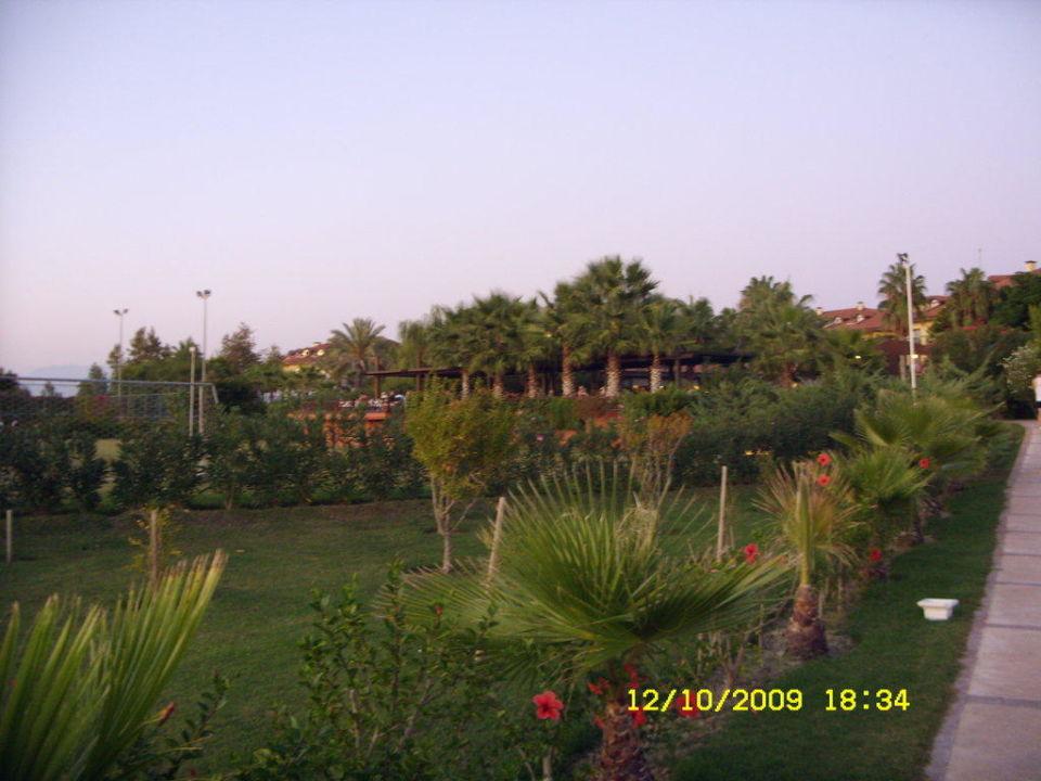 Viel grün Hotel Alba Resort