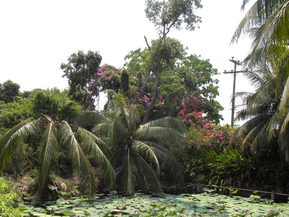 Lotusteich Baan Thai House