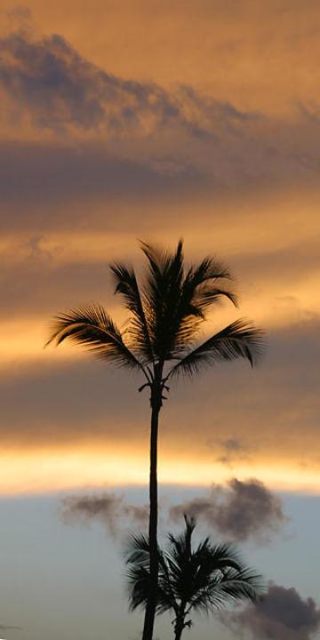 Sonnenuntergang Excellence Punta Cana