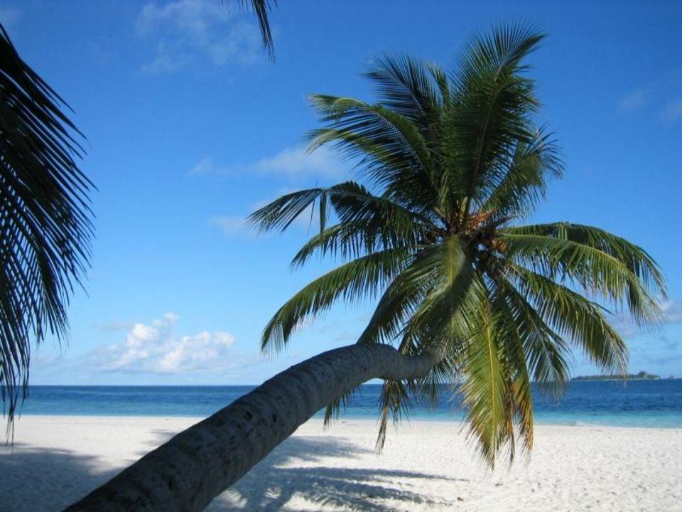 Malediven Traumhaft Fihalhohi Hotel Fihalhohi Island Resort