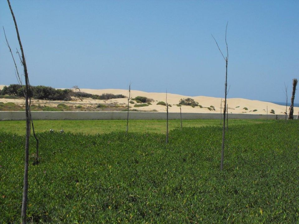 Bepflanzung mit Bäumen ROBINSON CLUB AGADIR