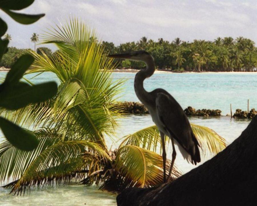 Natur Meeru Island Resort & Spa