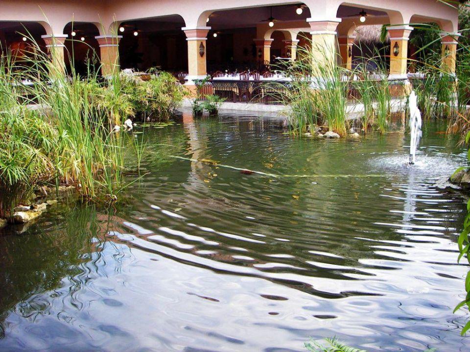 Teich um das Buffetrestaurant IBEROSTAR Hotel Paraiso del Mar