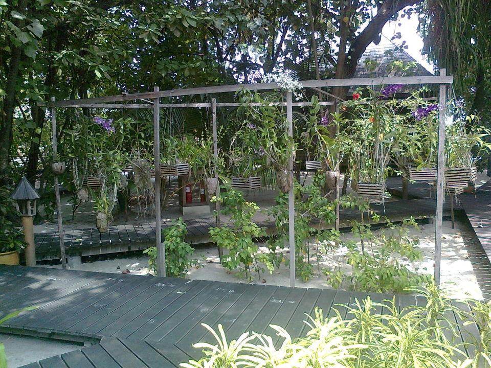 bild gartenbungalow zu gangehi island resort in mahibadhoo. Black Bedroom Furniture Sets. Home Design Ideas