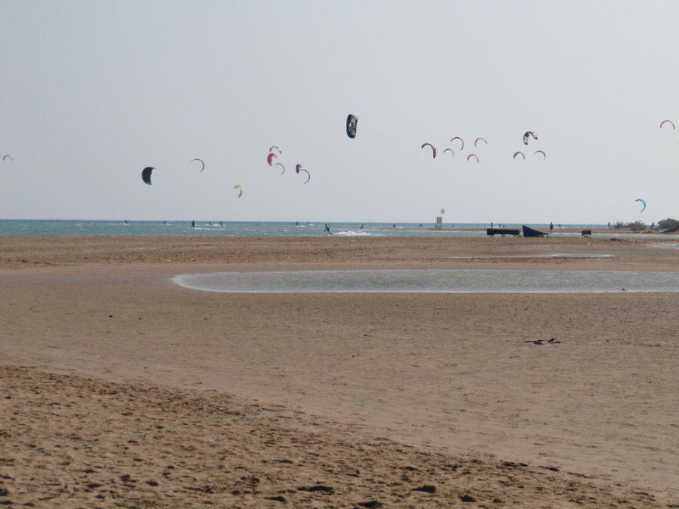 Weitere Kites am Strand Steigenberger Golf Resort El Gouna