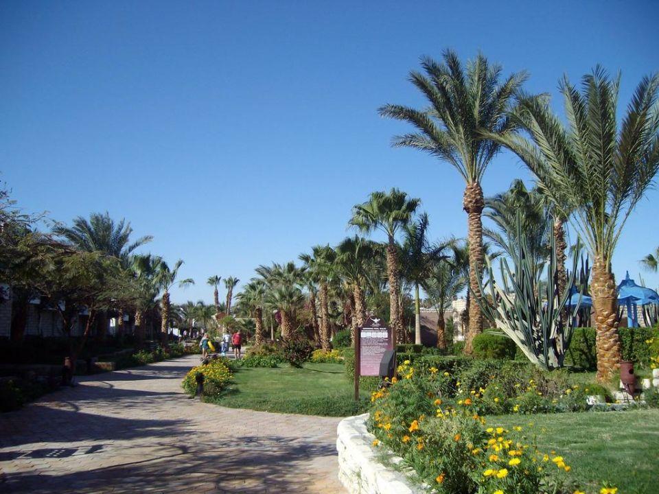 Außenbereich Aladdin Beach Resort