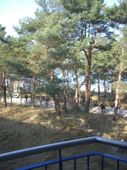 Ausblick aus Zimmer 3318 IFA Rügen Hotel & Ferienpark