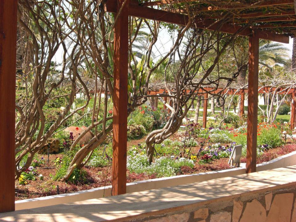 Blick von der Terrasse - Teilbereich des Gartens Hotel Nissi Beach Resort