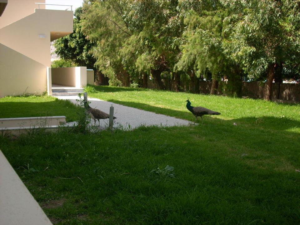 Garten Hotel Relax