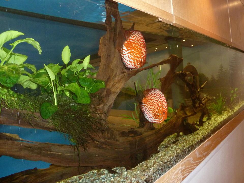 aquarium in der wand vor dem pool stolberger hof stolberg holidaycheck sachsen anhalt. Black Bedroom Furniture Sets. Home Design Ideas
