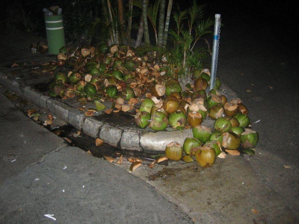 Leer getrunkene Kokusnüsse Merengue Village
