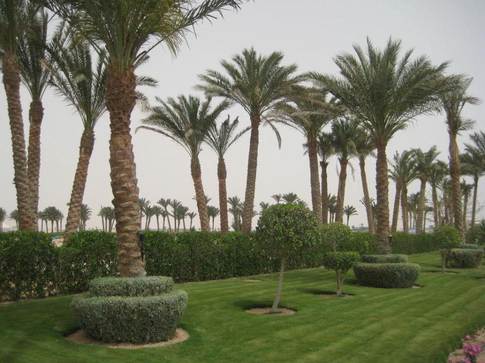 Террритория Grand Oasis Resort