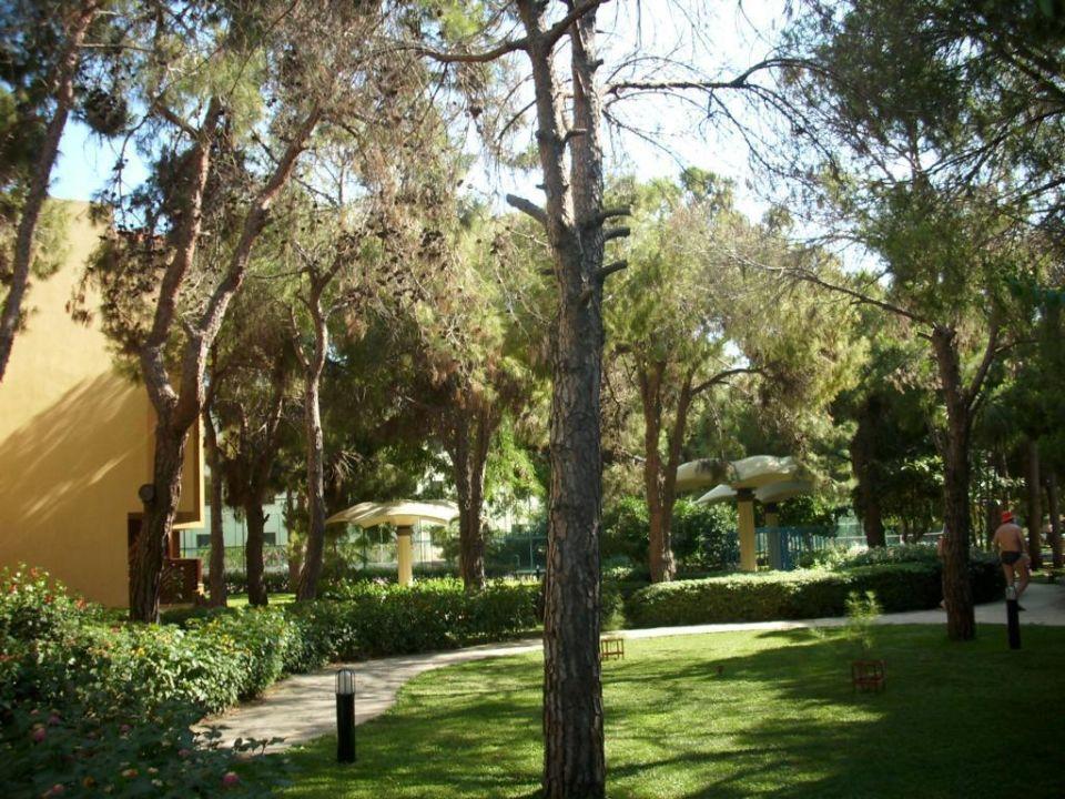 Garten Richtung Pool LABRANDA Excelsior Side