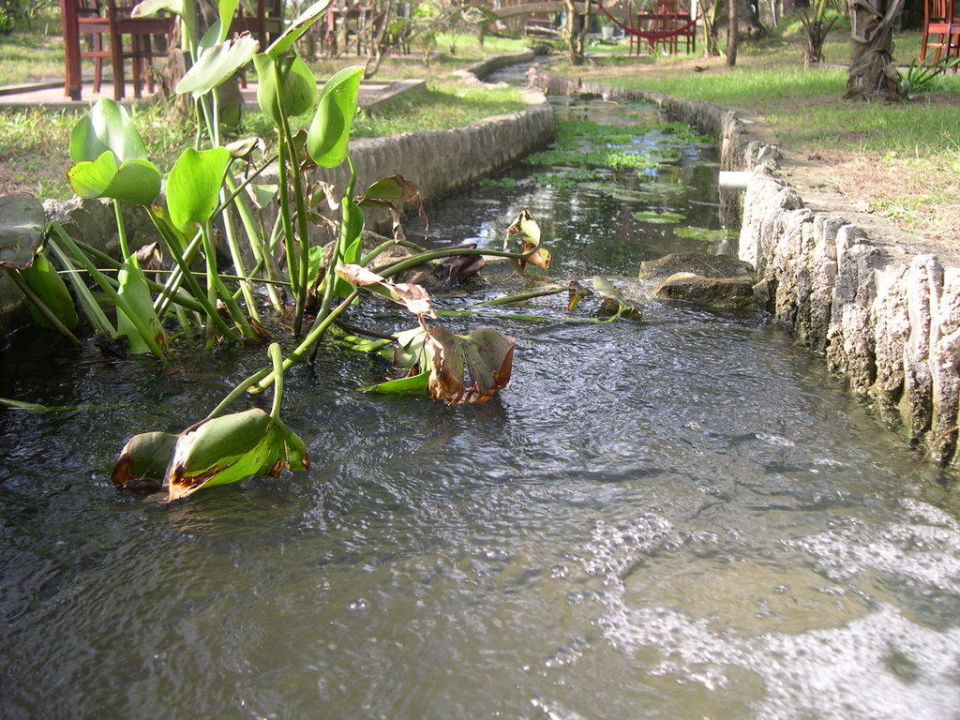 Bach mit tropischen Fischen Hotel Cassia Cottages