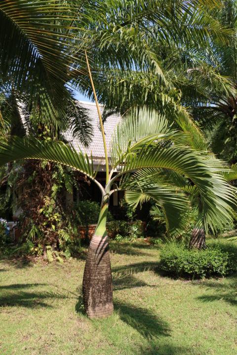 palmen im garten mukdara beach villa spa resort bang. Black Bedroom Furniture Sets. Home Design Ideas