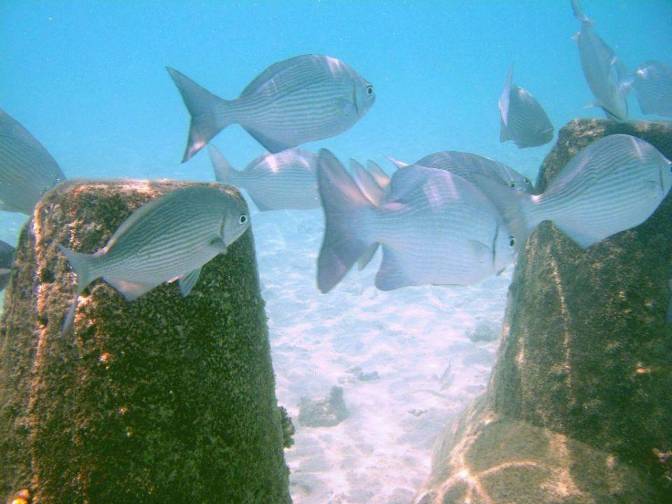 Fischschwarm Summer Island Maldives