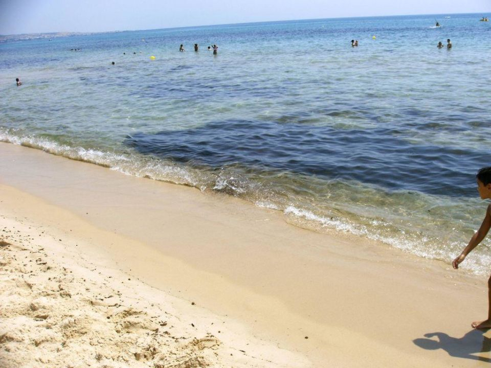 Strand mit Seegras im Meer Iberostar Averroes
