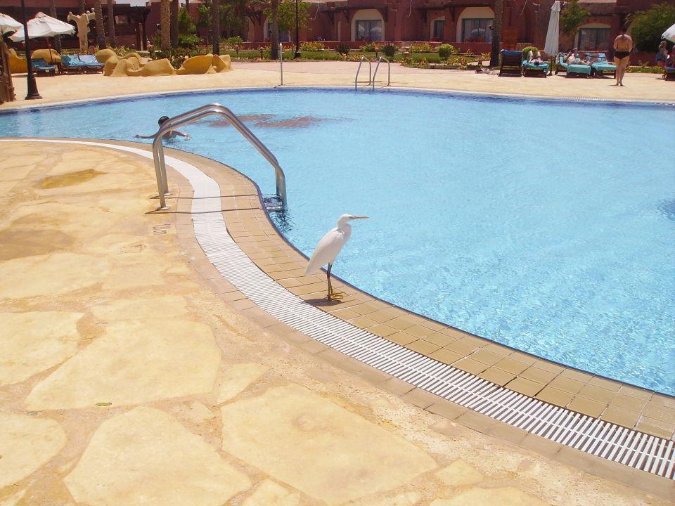 Ibis à la piscine centrale SENTIDO Oriental Dream Resort