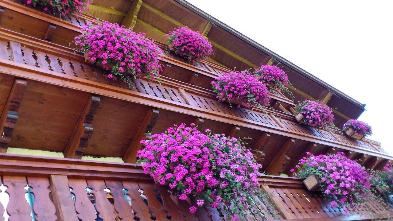 balkonblumen landgasthof schalchenhof gstadt am chiemsee holidaycheck bayern deutschland. Black Bedroom Furniture Sets. Home Design Ideas
