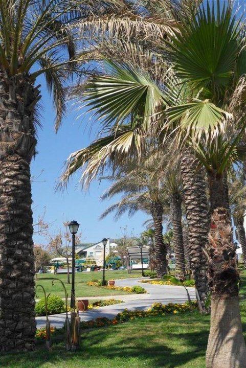 Garten der zum Strand führt Alva Donna Beach Resort