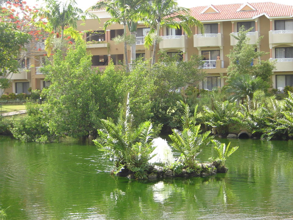 Teich Hotel Viva Wyndham Dominicus Palace