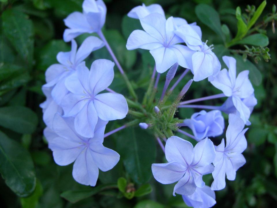 Schöne Blumen\